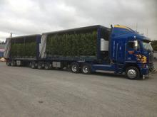 Curtainsider Trucks with tail-lifts 1